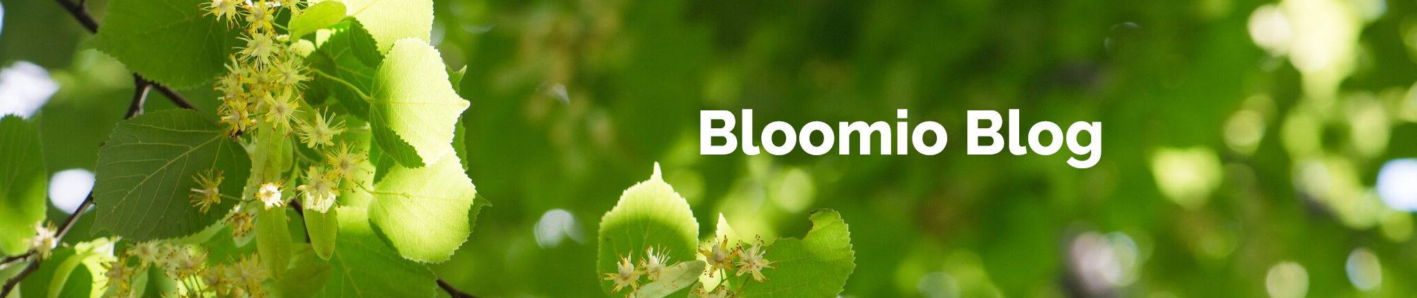All worldwide updates of Venture Capital Industry— BloomioAG